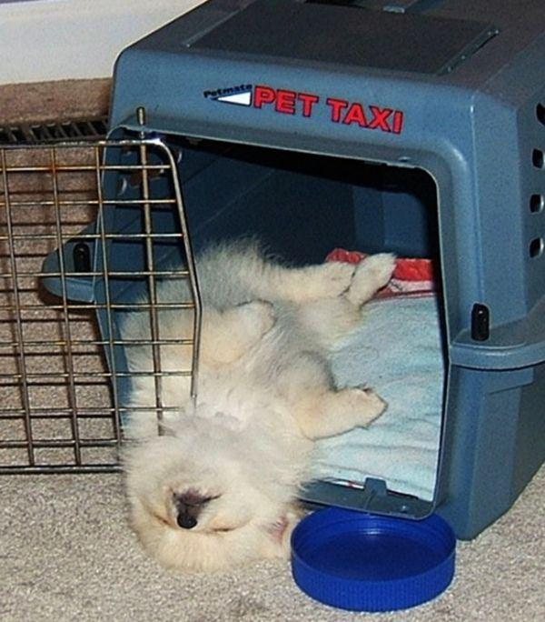 dogs_sleeping_15