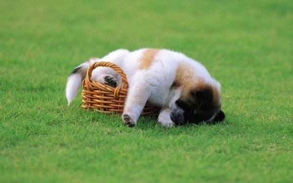 dogs_sleeping_17