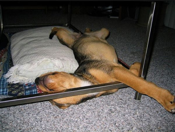 dogs_sleeping_6