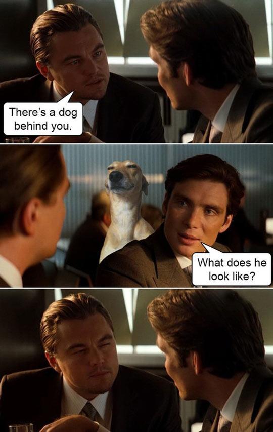 I See A Dog Behind You