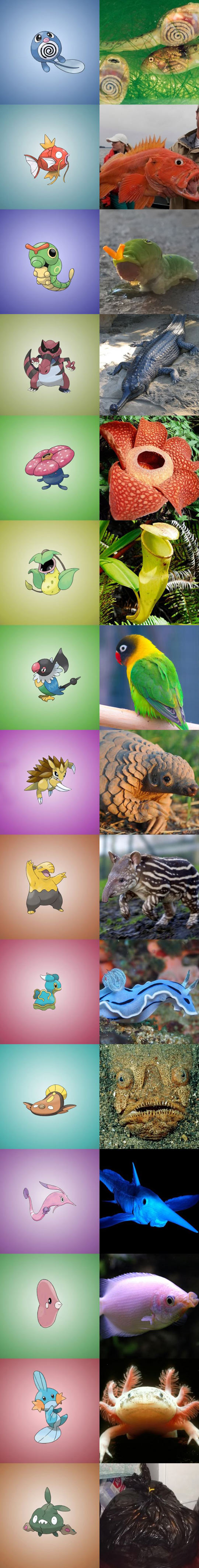 Real Things That Inspired Pokemons