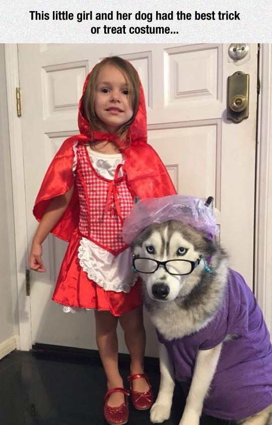 The Perfect Human-Pet Costume