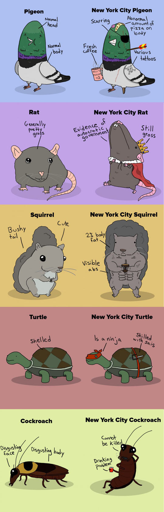 funny-animals-difference-New-York-City