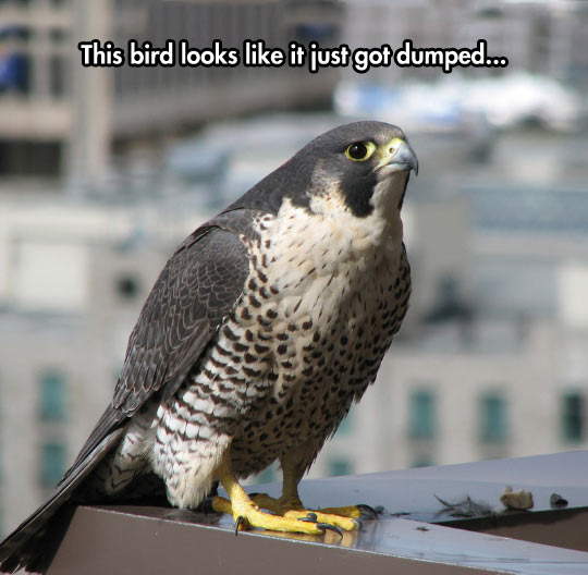 funny-bird-dumped-face-sad