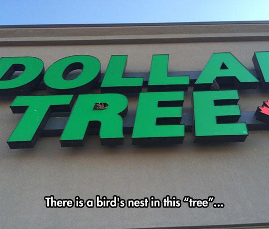 funny-bird-nest-tree-sign-letter