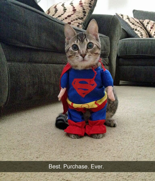 The Super-Kitty