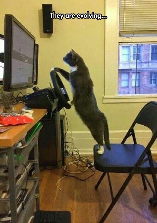 Cats Are Gaming Now