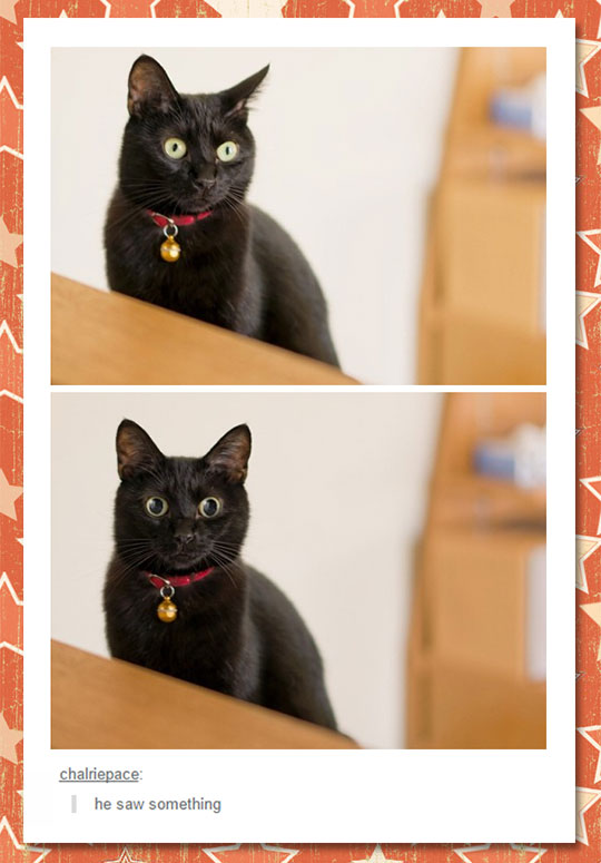 funny-cat-open-eyes-surprised-pupils