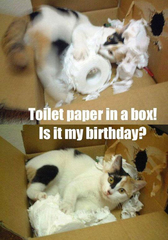 funny-cat-playing-toilet-paper-box