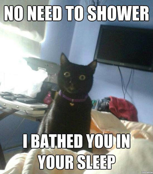 funny-cat-shower-sleep-creepy