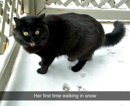 funny-cat-snow-first-time