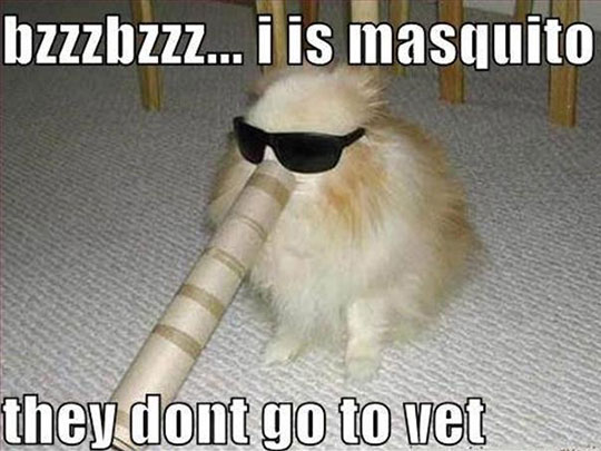 funny-cat-sunglasses-costume-mosquito