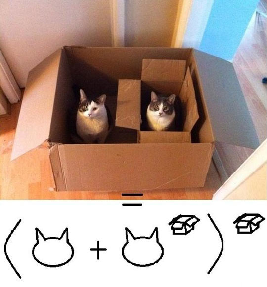funny-cats-boxes-math-inside