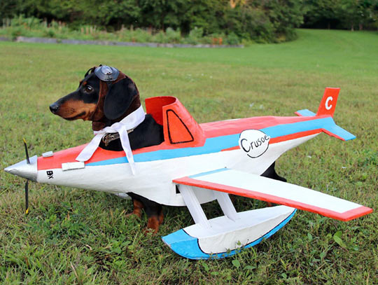 funny-dog-airplane-fly-pilot