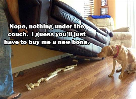funny-dog-bone-couch-hidden