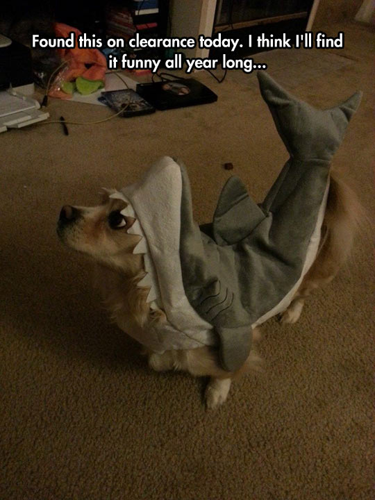 Cutest Shark I