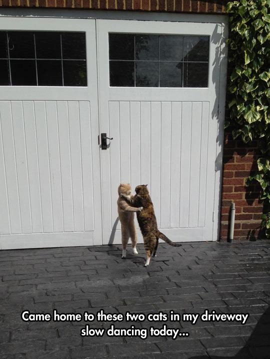 funny-driveway-cats-dancing