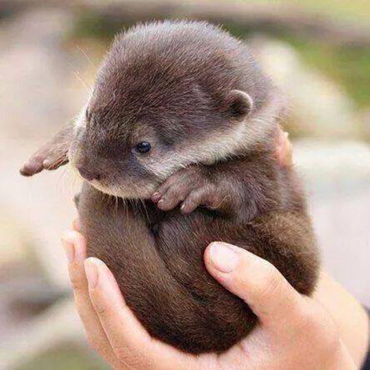 funny-hand-otter-baby-cute