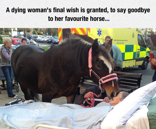 funny-horse-old-woman-dying