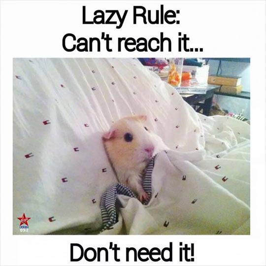 funny-lazy-rule-Guinea-pig