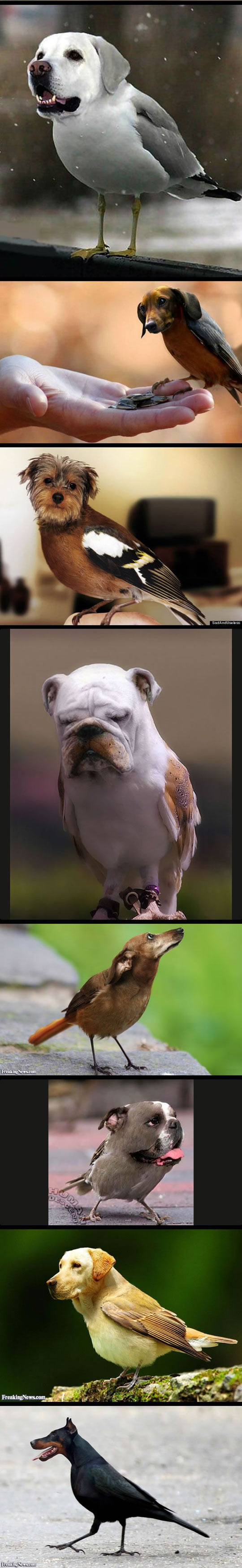 funny-mix-dog-heads-birds-bodies-duck