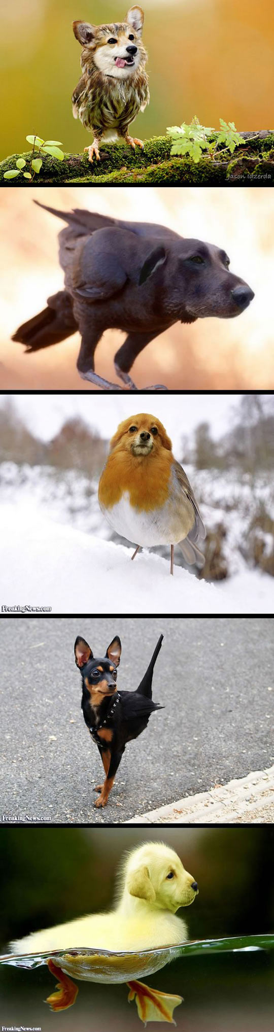 funny-mix-dog-heads-birds-bodies
