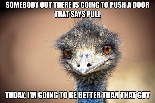 funny-ostrich-happy-smiling-door