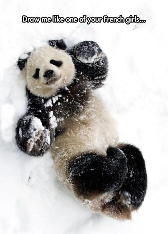 funny-panda-playing-snow-cute