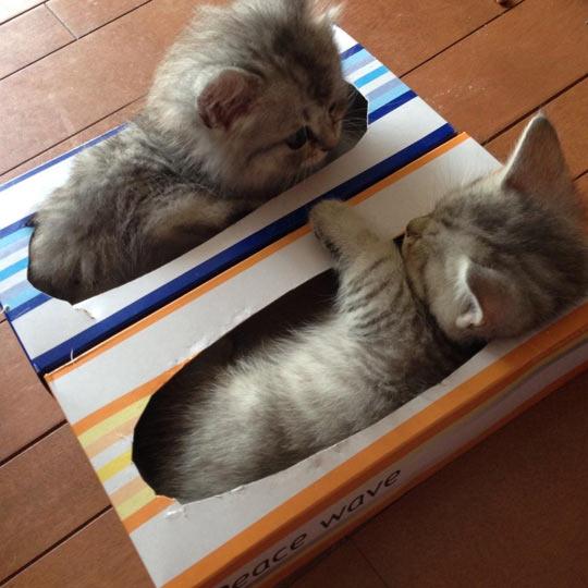 Kitties Are Already Packed