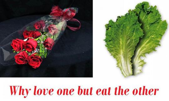 funny-poor-lettuce-rose-petals