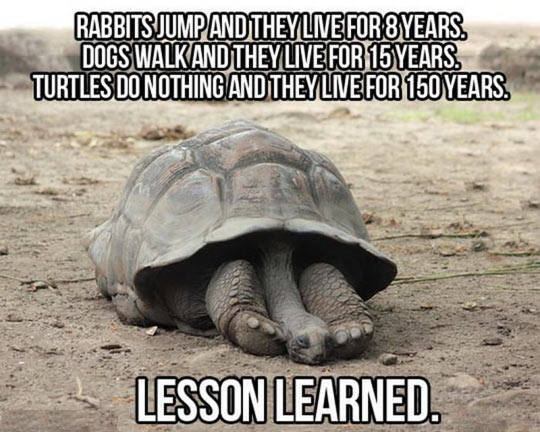 funny-rabbits-turtles-lesson-learn-years