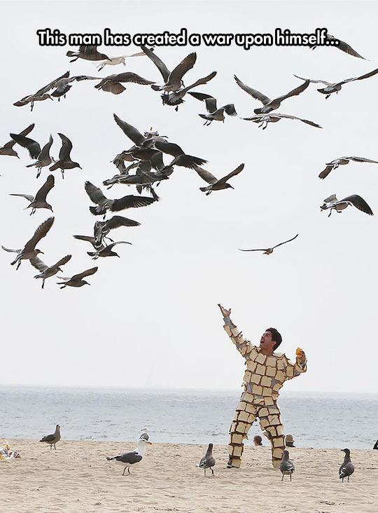 funny-seagull-bird-beach-bread