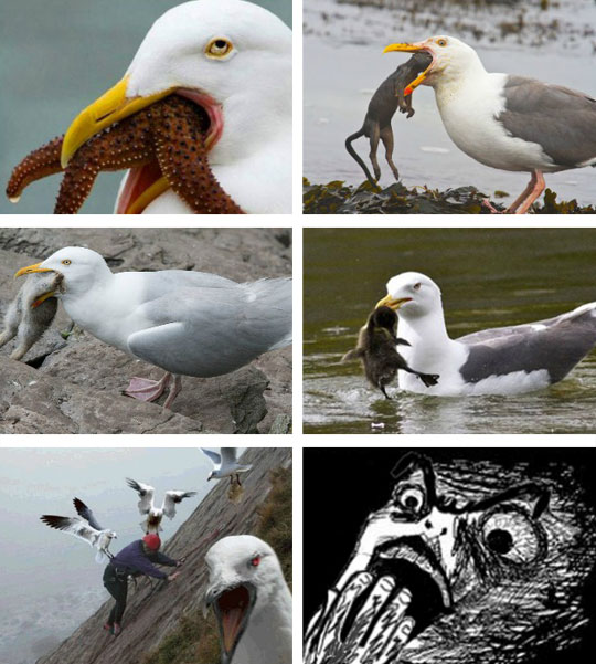 funny-seagull-eating-animals-beach