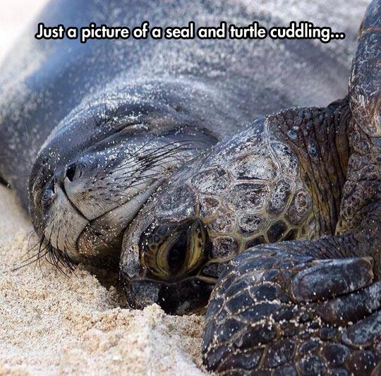 funny-seal-turtle-cuddling-sand.jpg