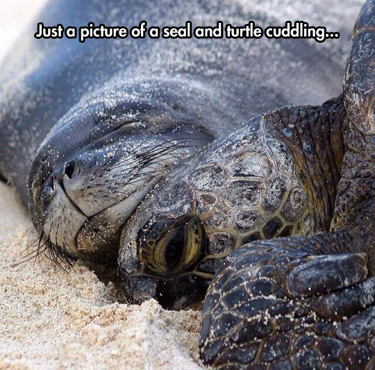 Turtles And Seals Are Bros In Nature