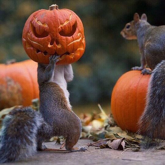 Stealing A Pumpkin