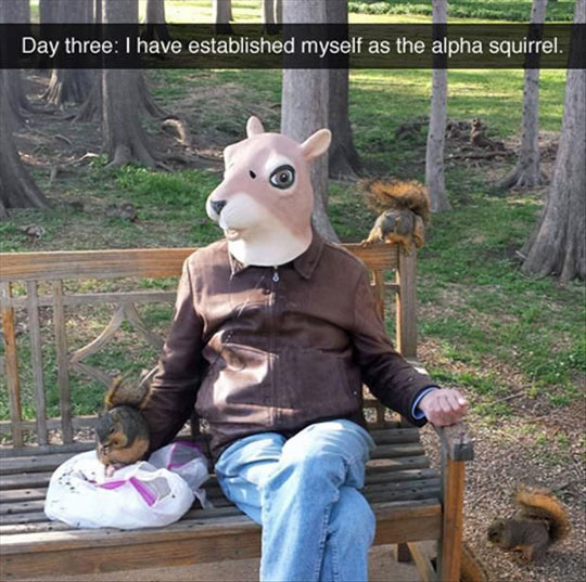 funny-squirrel-park-mask-bench