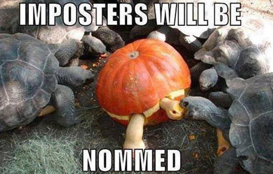 funny-turtle-eating-pumpkin-shaped
