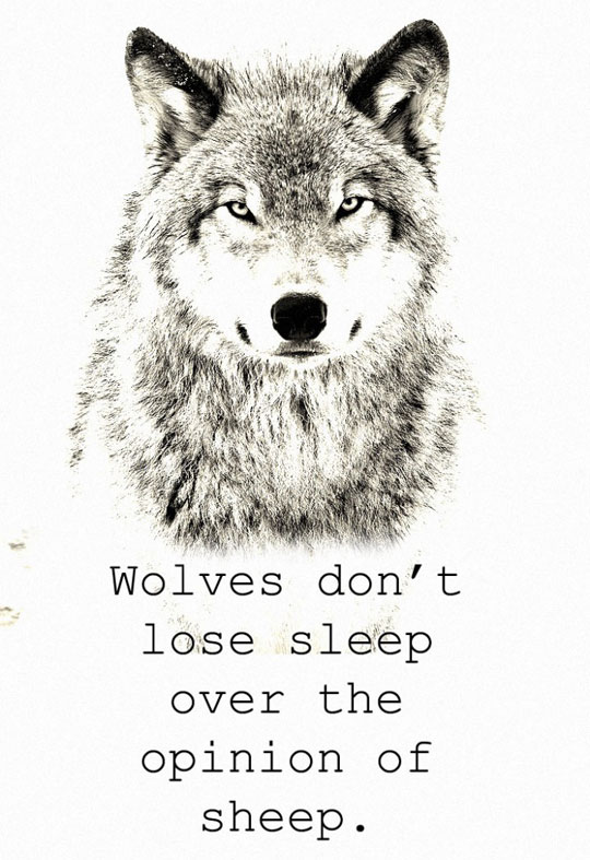 Wolves Just Don