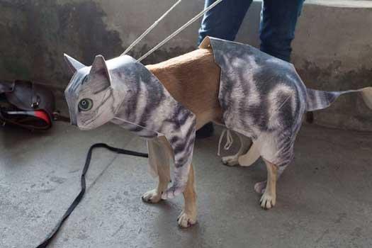 seems-legit-cat-dog