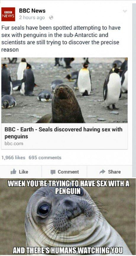 we need sealguins