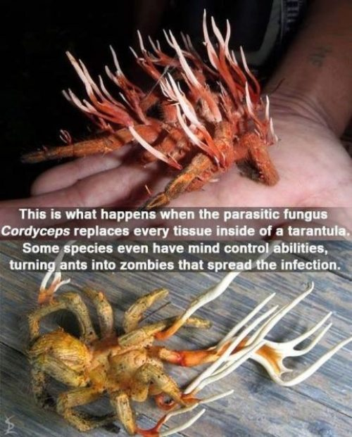 Terrifying-facts-19