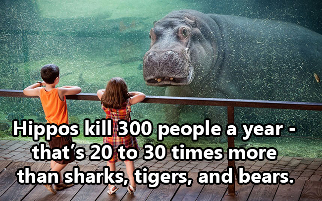 Things-That-Are-More-Deadly-Than-Sharks-Wildammo-13