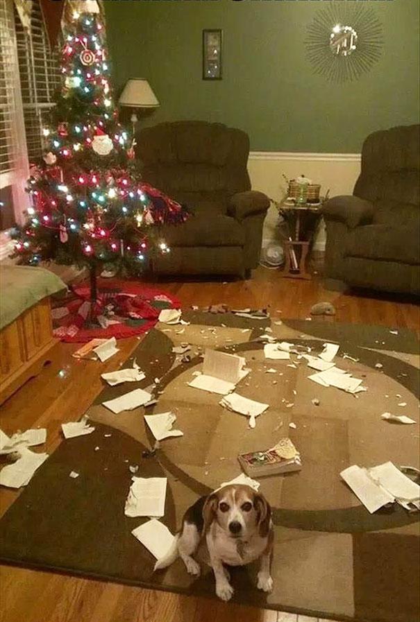 XX-animals-destroying-Christmas-10__605