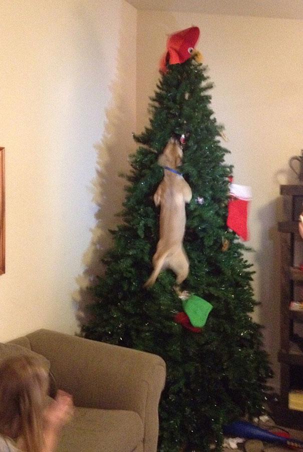 XX-animals-destroying-Christmas-11__605