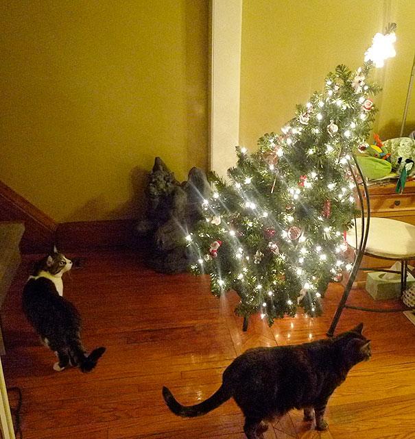 XX-animals-destroying-Christmas-15__605