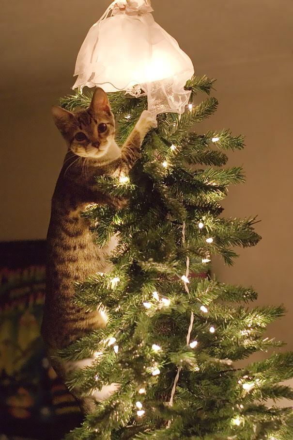 Christmas Tree Melbourne