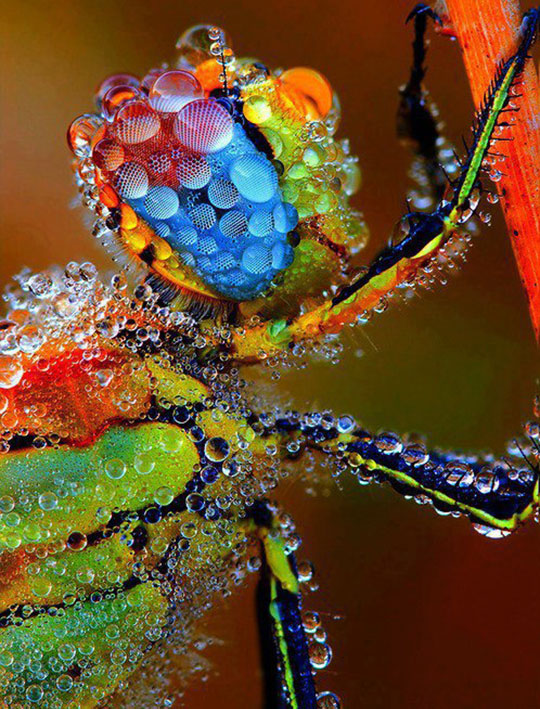 cool-dragonfly-water-colors