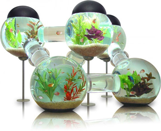 This Aquarium Is Awesome