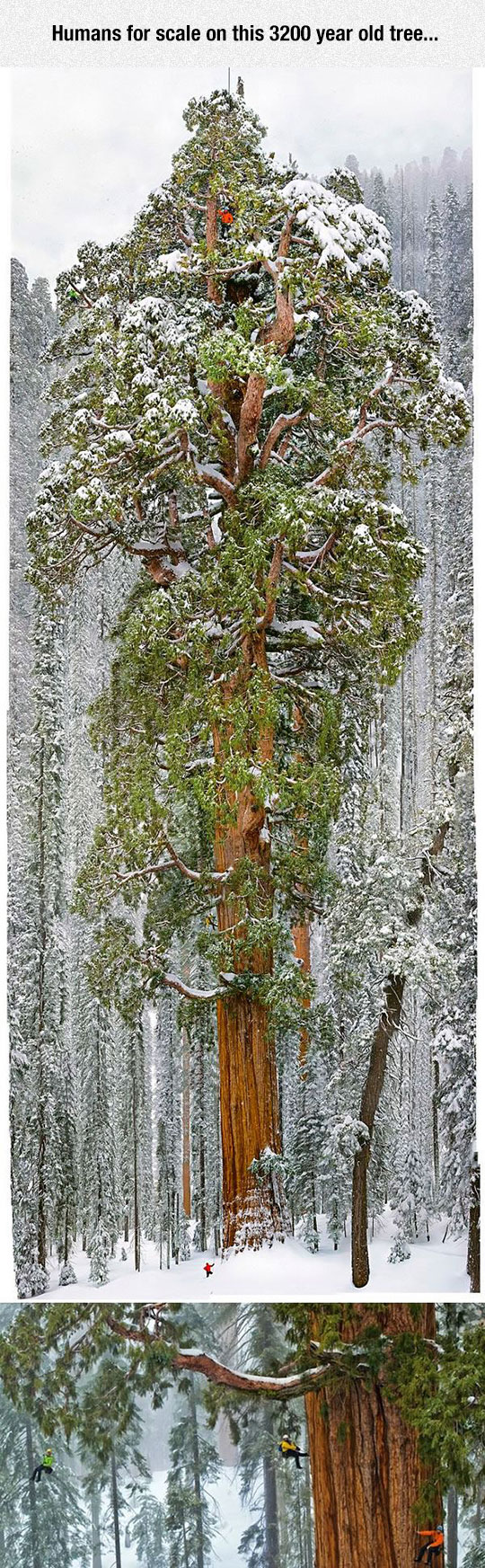 One Large Tree